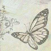 butterfly-998292__180