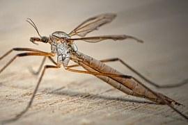 mosquito-700871__180