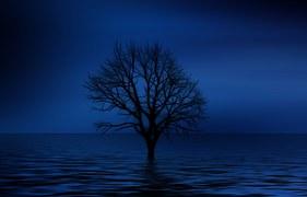 tree-738816__180