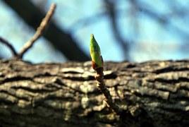 twig-18078__180