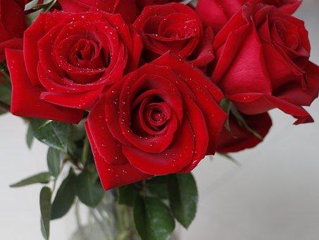 rose-2096915__340
